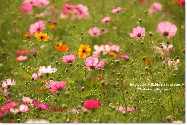 IMG_1075_20111012202819.jpg