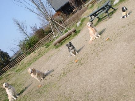 CIMG4684_20110328193229.jpg