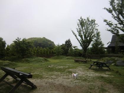 CIMG9181_20110512174102.jpg