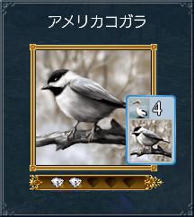 02_アメリカコガラ