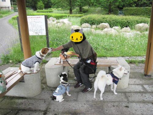 10長岡公園348