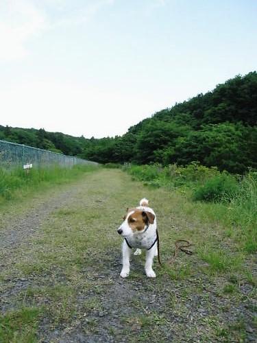 10長岡公園364