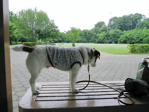 10長岡公園391