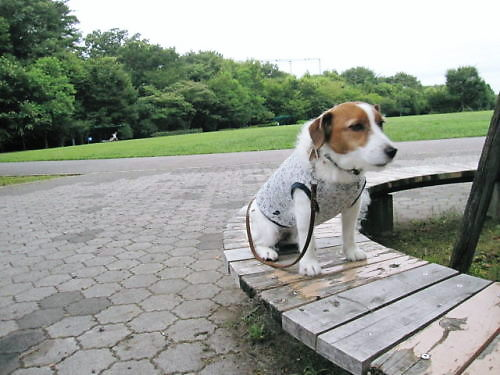 10長岡公園514