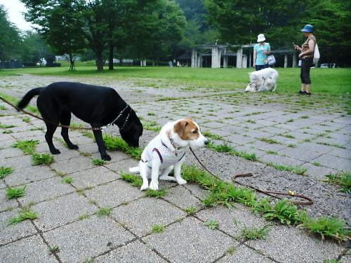 10長岡公園685
