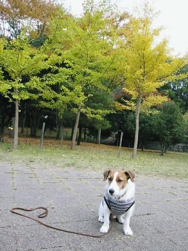 10長岡公園924