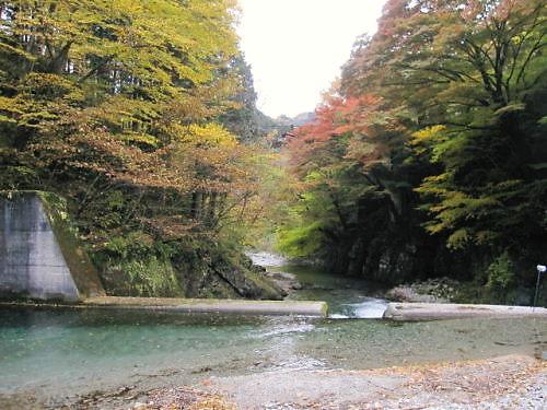 10草花木053