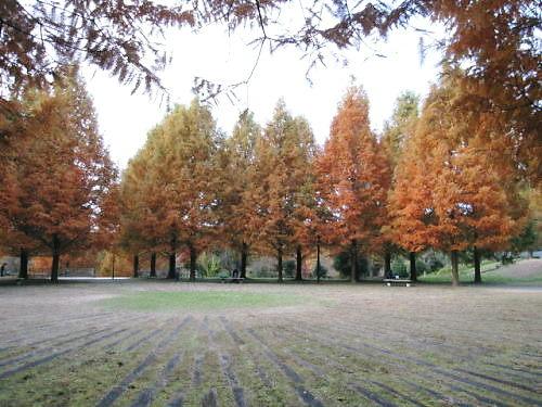 10長岡公園949