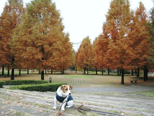 10長岡公園953