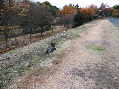 10長岡公園956