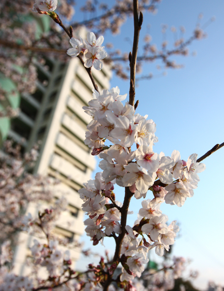 wakayoshi2011046