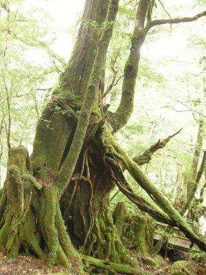 木からパワーが