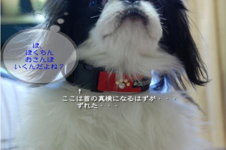 tDSC_6592.jpg