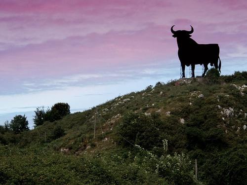 ブエルタ牛