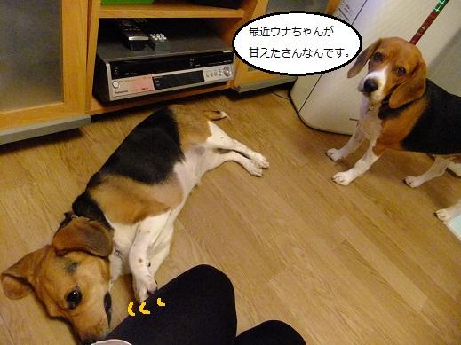 008_20111018000832.jpg