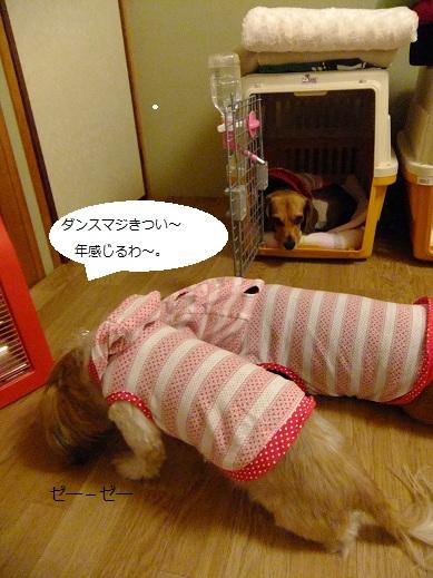 123_20110516094651.jpg