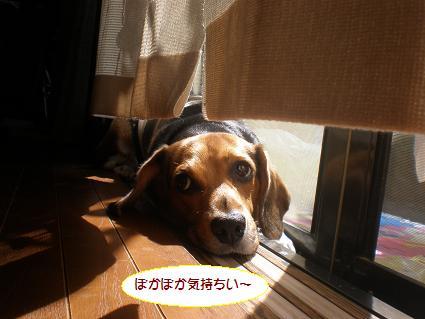P9146692.jpg