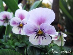 上品な花色ですこと (^ ^)