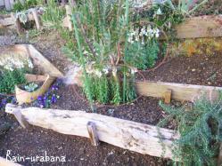 草丈のある植物から植えます