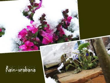 とっぷり雪の中!