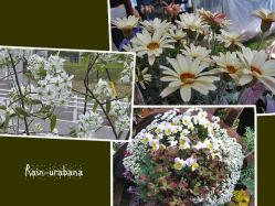 花だらけ f(^ ^;