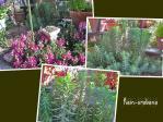 お猫のトイレは植物がモリモリざんす f(^ ^;