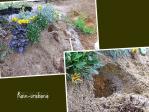 真横に植え穴を掘って植えてます♪
