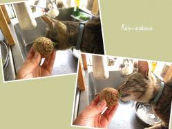 里芋から芽が出た...って、おい! (--lll