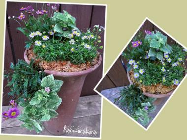植木鉢のお休みはまたまた延期 f(^ ^;