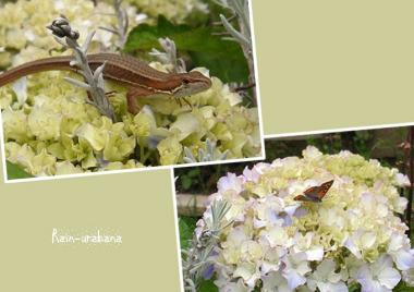 カナヘビと蝶々♪