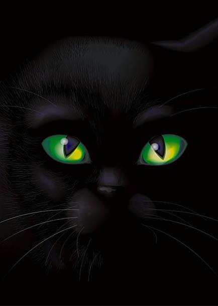 gato preto  6 comentaacute;rios