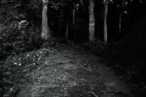 Scary+Wood!.jpg