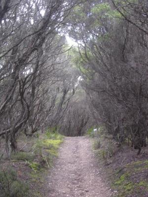 scary+woods.jpg