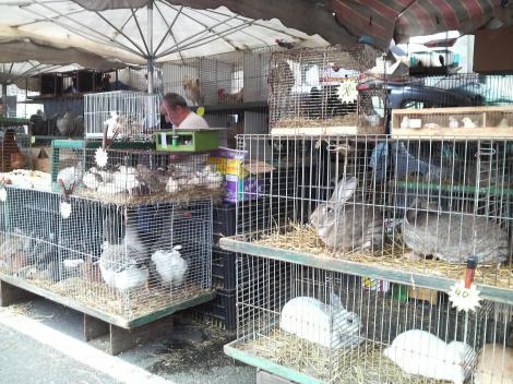 ウサギかわいい