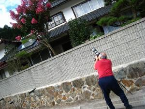 2009.夏、「百日紅」・「サルスベリ」、階見、「撮彩」1