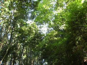 「木漏れ日」2009.