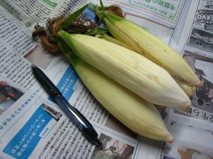 「もちきび」、小さなトウモロコシ、1