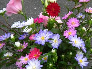 村上農園の「花」、