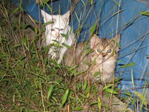 「赤木さんちの子猫ちゃんたち」、1