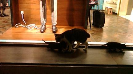 丸の内の猫1