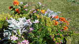 20111026高島屋の秋の花達