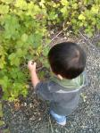 20100805black berry1
