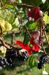 20101017 winery (2)