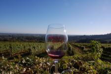 20101017 winery