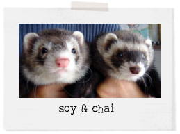 soy&chai