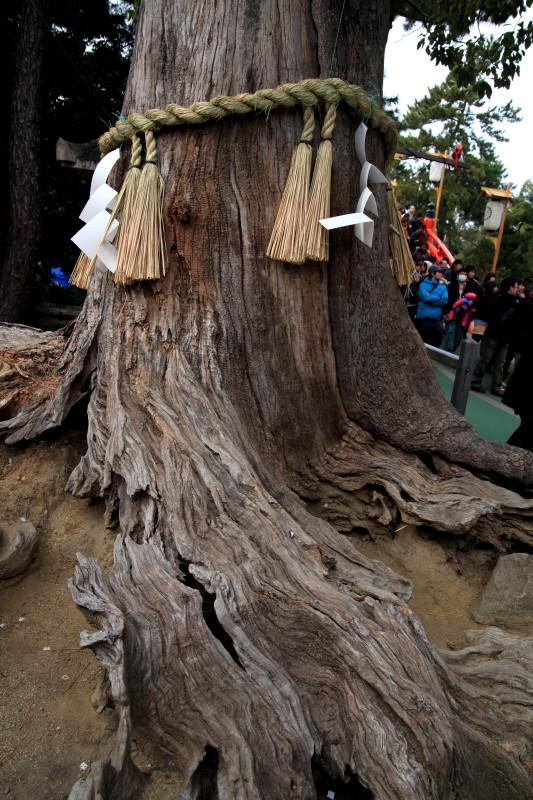 流れ続ける木