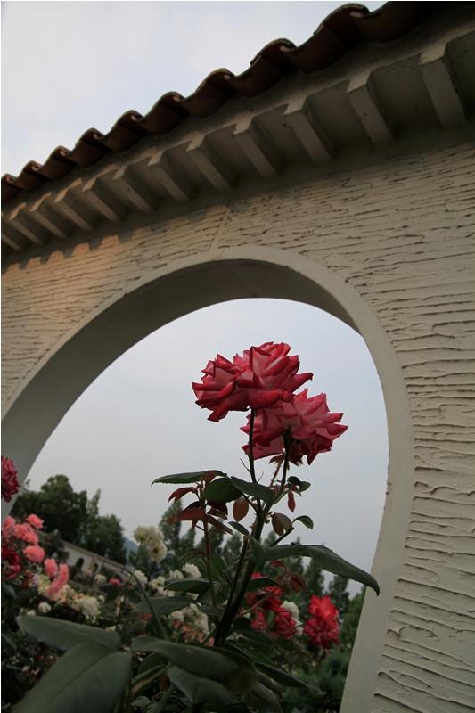 城に咲く薔薇