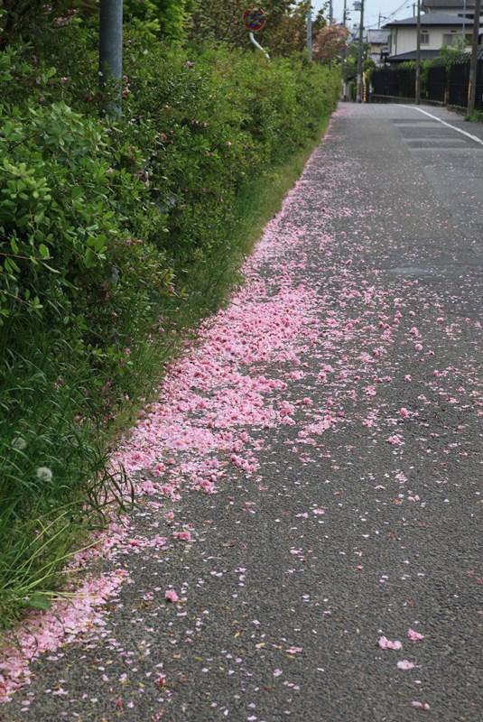 散って花の道