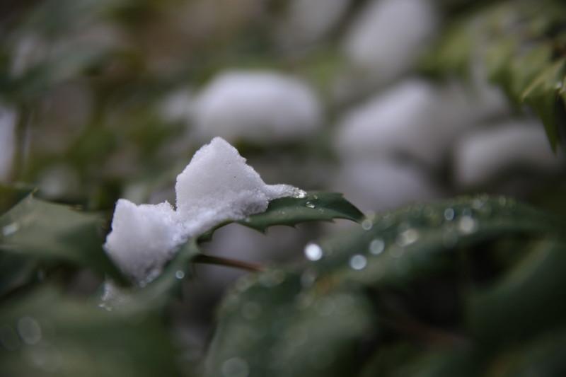 冬空からの贈り物
