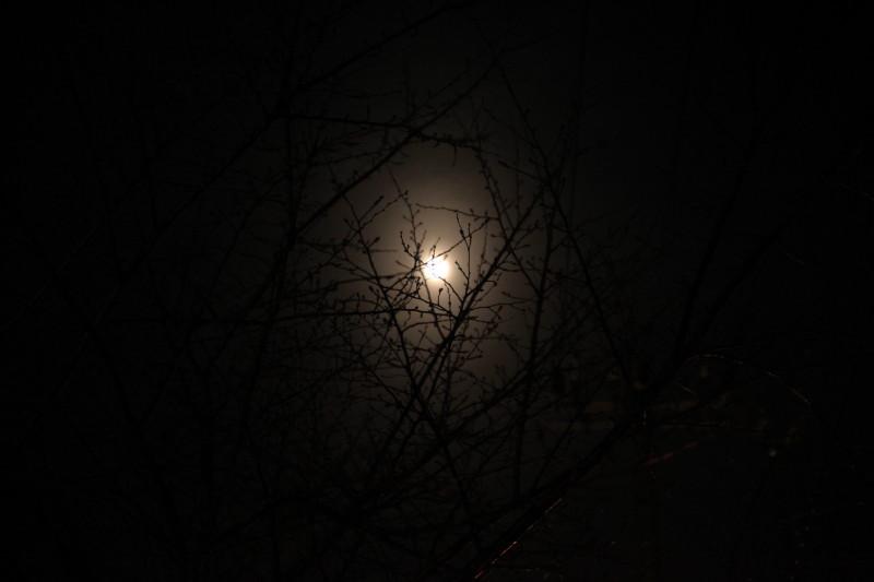 泣いたのは満月のせい